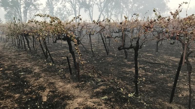California Wineries Sue Insurers over Smoke-Tainted Wines