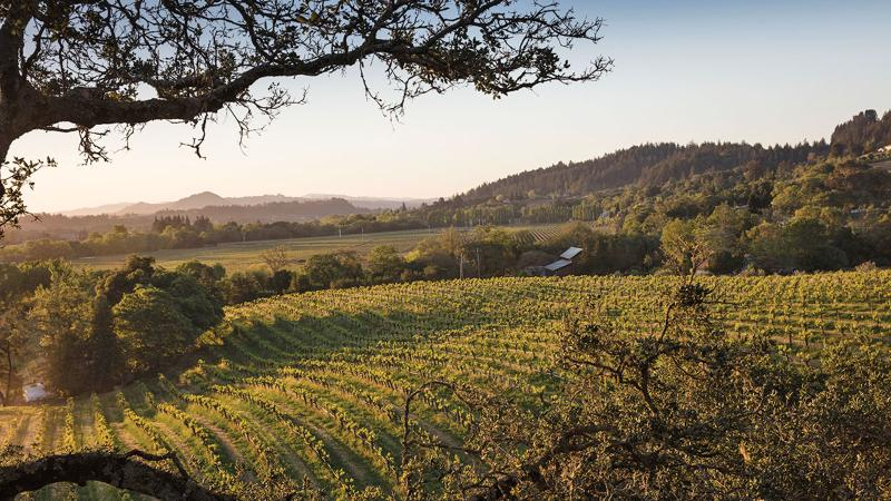 Quivira notched two outstanding Sauvignon Blancs in this report, including one from its Wine Creek Ranch Vineyard in Sonoma's Dry Creek Valley.