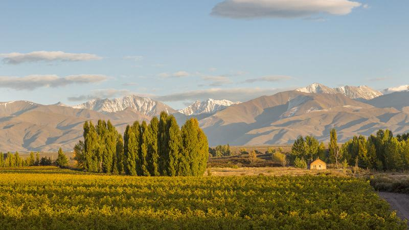 Bodega Catena Zapata's Adrianna Vineyard is the source of a distinctive classic-scoring Malbec released by the trailblazing producer.