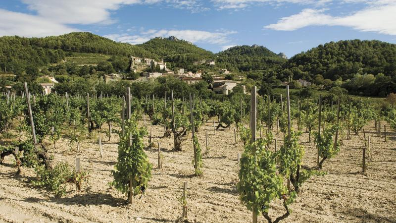 The higher elevation and cooler climate of Gigondas moderated the summer heat in 2017 to yield some of the Southern Rhône's best wines from the vintage.