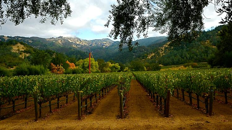 Insider: 96-Point Beguiling California Cabernet